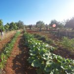 Casa Tekne own an organic garden - Fitness Retreats Ibiza